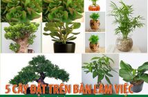 5 loại cây đặt trên bàn làm việc hợp phong thủy tuổi Kỷ Tỵ