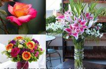 Cách cắm hoa tươi lâu hiệu quả 100%